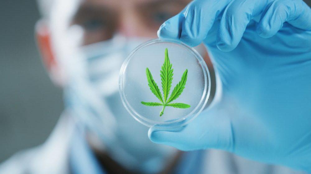 Alabama Lawmakers Approve Medical Marijuana Bill